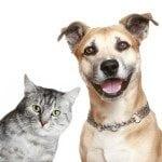 saving money on pet supplies