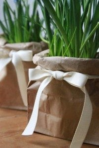 700_muscari-in-bags-with-ribbon