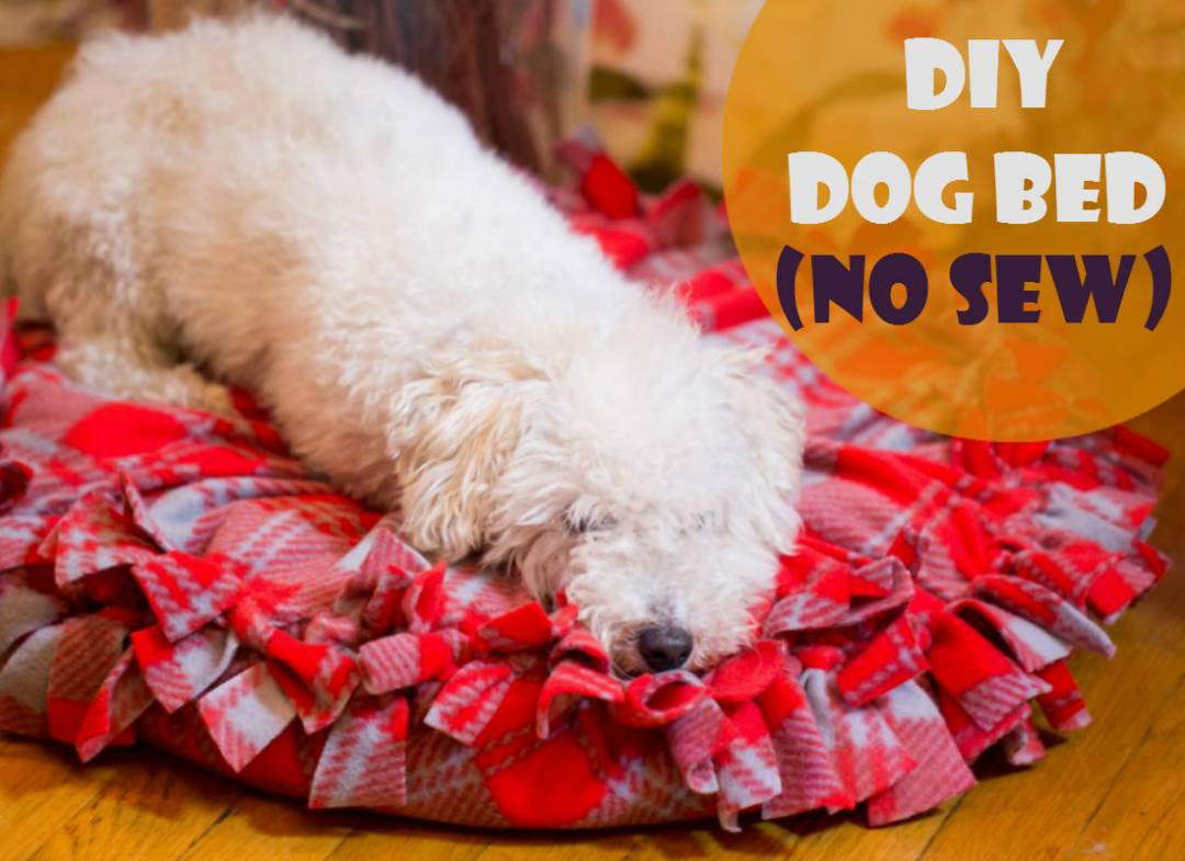 A no-sew dog bed to keep your pet warm and comfy. Express your love for your dog with this simple DIY project!
