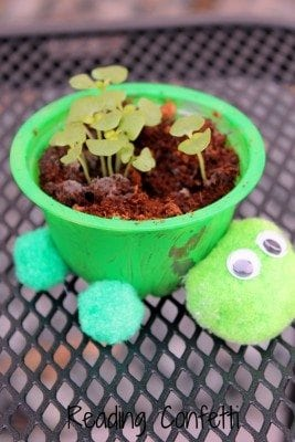 turtle herb planters