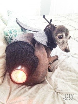 bug light dog