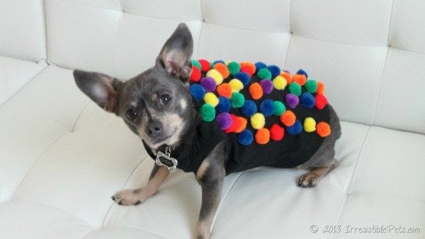 candy crush dog