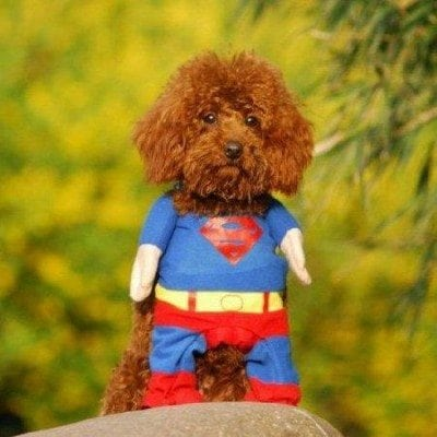 dog superman