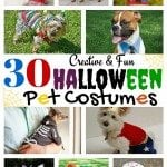 30 Creative and Fun Halloween Pet Costumes