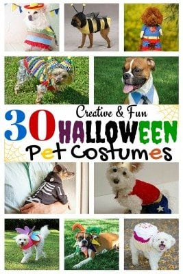 Get inspired with these beautiful and crafty DIY halloween pet costumes. Your pet will surely love wearing one of these and be with you this Halloween. Make your pet the star!