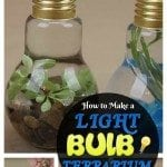 DIY Light Bulb Terrarium: An Enlightening DIY Project You Can Make in Less than 5 Minutes