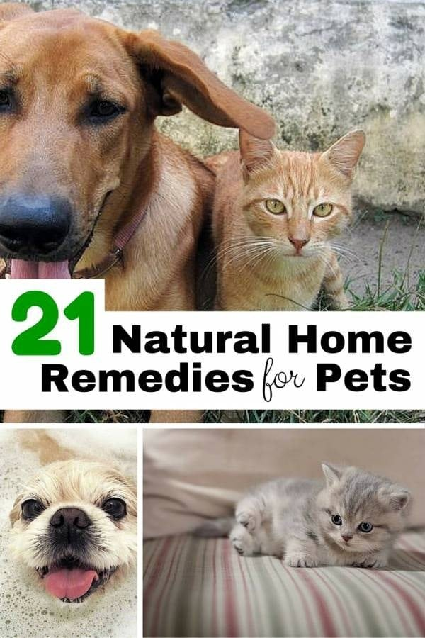 Try these natural remedies for common pet problems so you can protect your pets from toxic chemicals of various medications.