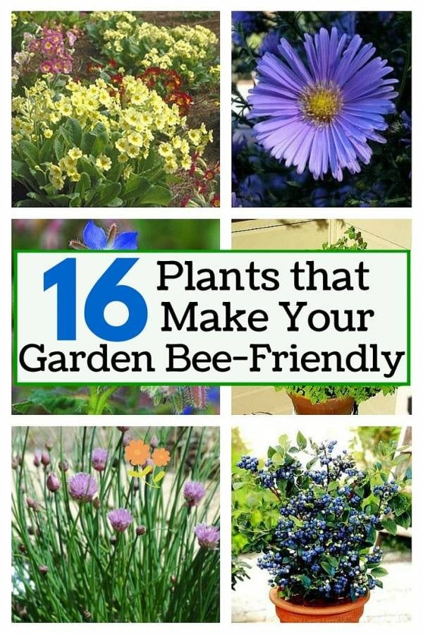 Honeybees may sting but they play an important role in our environment. Add some of these 16 plants and attract bees to keep your garden healthy.