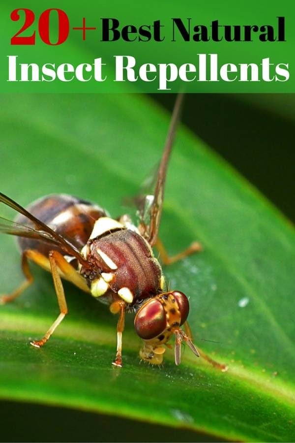 Enjoy outdoors with these wonderful natural insect repellents. You can create your own with a few materials and easy-to-follow instructions.