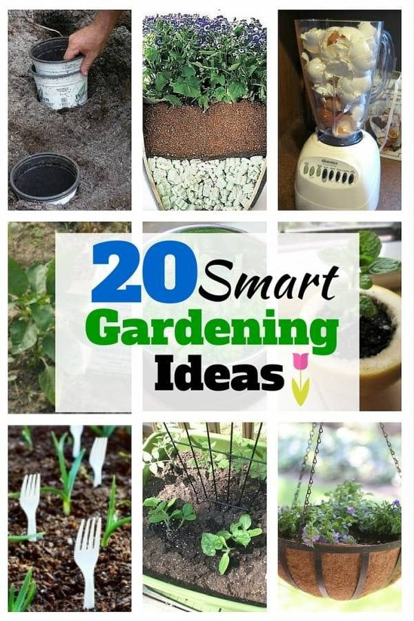 If you are in a tight budget, try these smart gardening tips and ideas. Get your garden ready for spring.