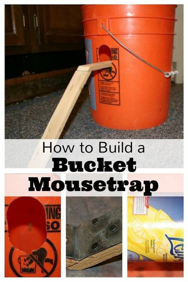 Create your own mousetrap with a bucket, a ramp, a can and peanut butter. Easy to set up and cheap.