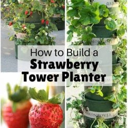 <thrive_headline click tho-post-168668 tho-test-29>How to Build a Strawberry Tower Planter</thrive_headline>