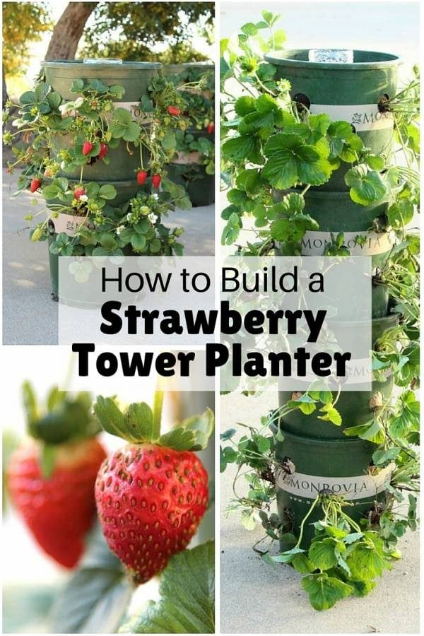 Have your own fresh supply of strawberries all year long with this super easy DIY tower planter. It is also good for other herbs and veggies.