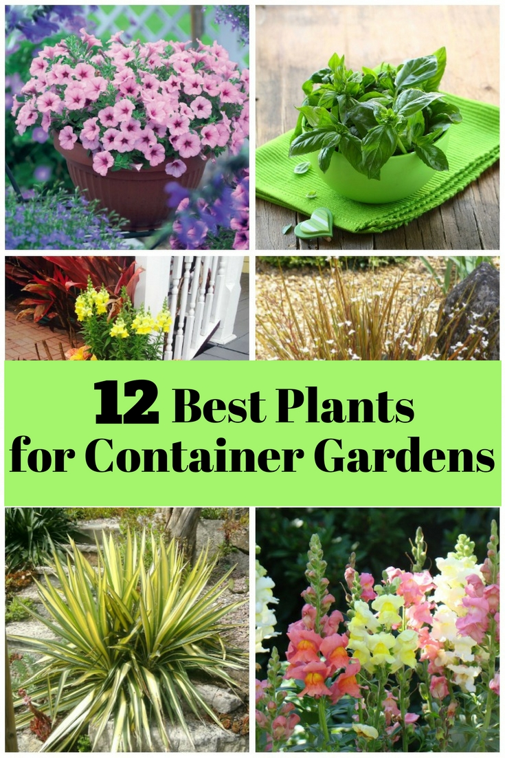 Who says you need a large yard to have a garden? Enjoy the beauty of nature with these easy to grow container plants.