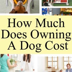 <thrive_headline click tho-post-171223 tho-test-150>How Much Does Owning a Dog Cost?</thrive_headline>