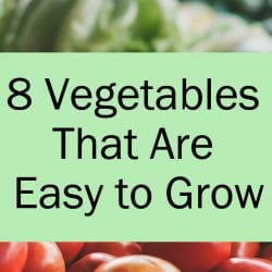 <thrive_headline click tho-post-171190 tho-test-151>8 Vegetables That Are Easy to Grow</thrive_headline>