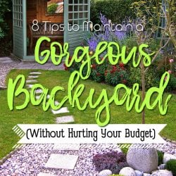 <thrive_headline click tho-post-220723 tho-test-178>8 Tips to Maintain a Gorgeous Backyard (Without Hurting Your Budget)</thrive_headline>